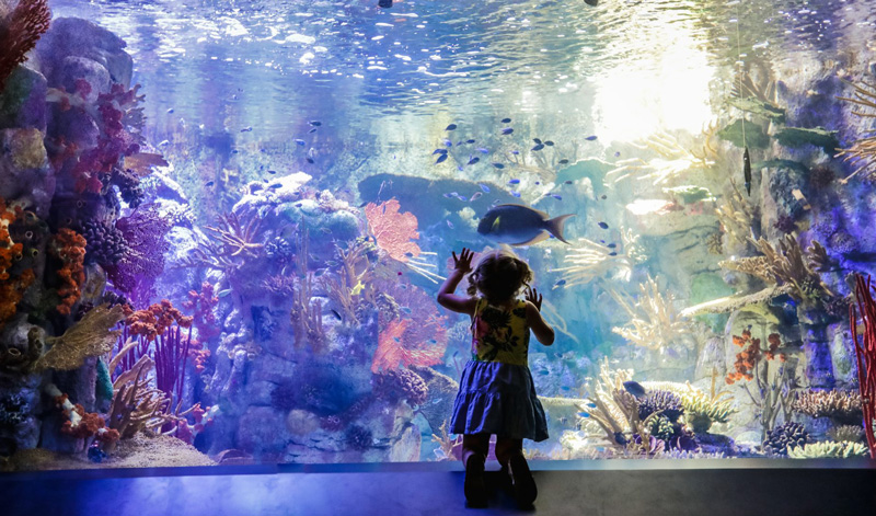 Silhouette Of Child Looking At Fish At The Birch Aquarium In San Diego California